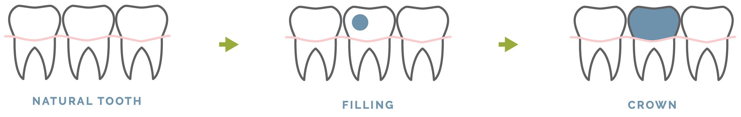 dental_cycle-01.jpg