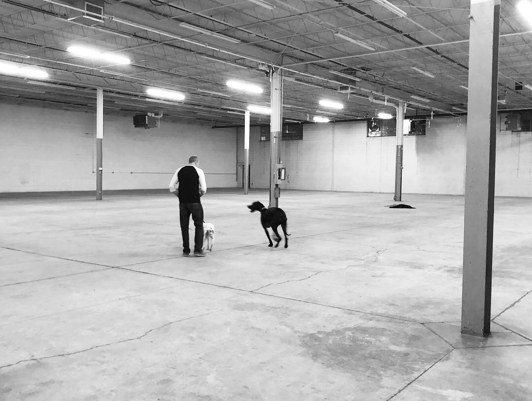 The dogs love the new space!
