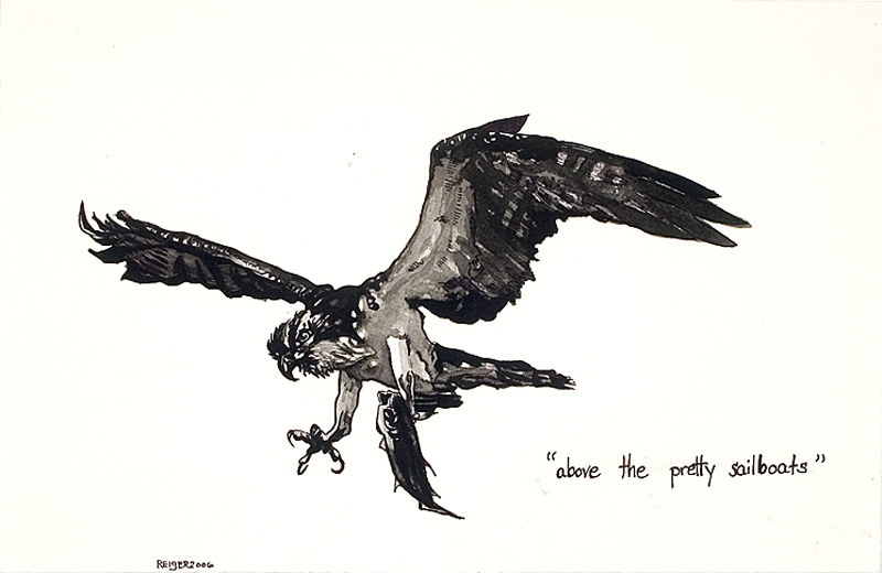 Pandion haliaetus  (Pandion sea-eagle)  Sumi ink on paper 7 x 11 3/8 inches 2006