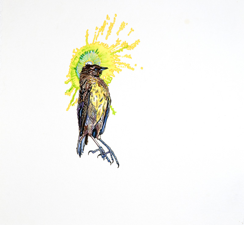 brained meadowlark  Ink and watercolor on paper 11 1/4 x 12 1/4 inches 2007 (AVAILABLE FOR PURCHASE - CONTACT ARTIST IF INTERESTED)