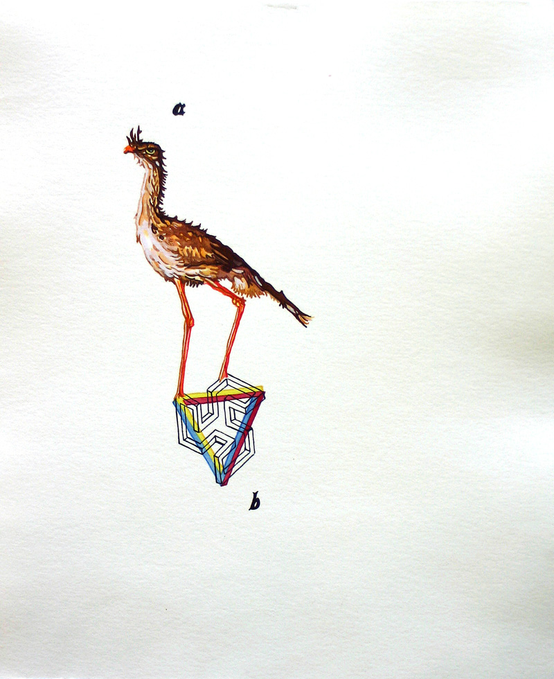 Red-legged seriema (a, b)  Pen and watercolor on paper 14 3/4 x 12 3/8 inches 2007