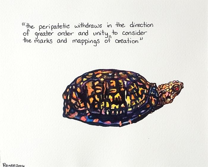 Terrapene carolina  (Carolina's small turtle)  Watercolor and ink on paper 6 3/4 x 8 1/2 inches 2006