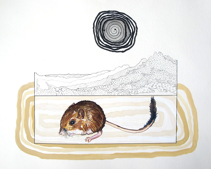 then and then (San Bernardino kangaroo rat)  Gouache, watercolor, marker, and sumi ink on paper 15 x 18 inches 2012