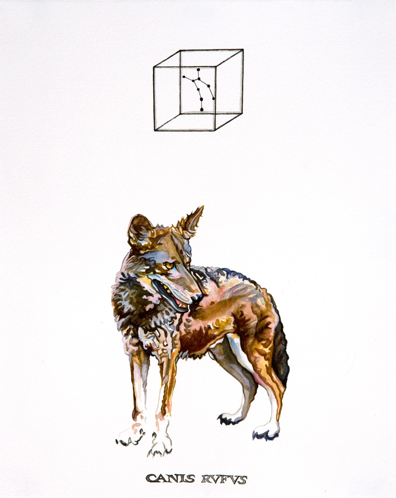 Red Wolf #1  Giclée Print 10 x 8 inches 2010