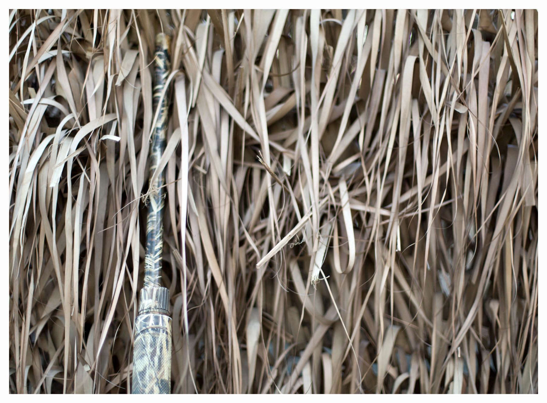 Shotgun leaning against duck blind; Eastern Shore of Viriginia; November 2013