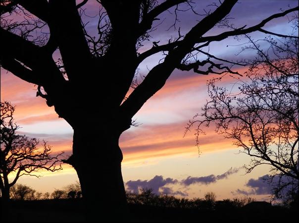 glastonbury_tree.jpg