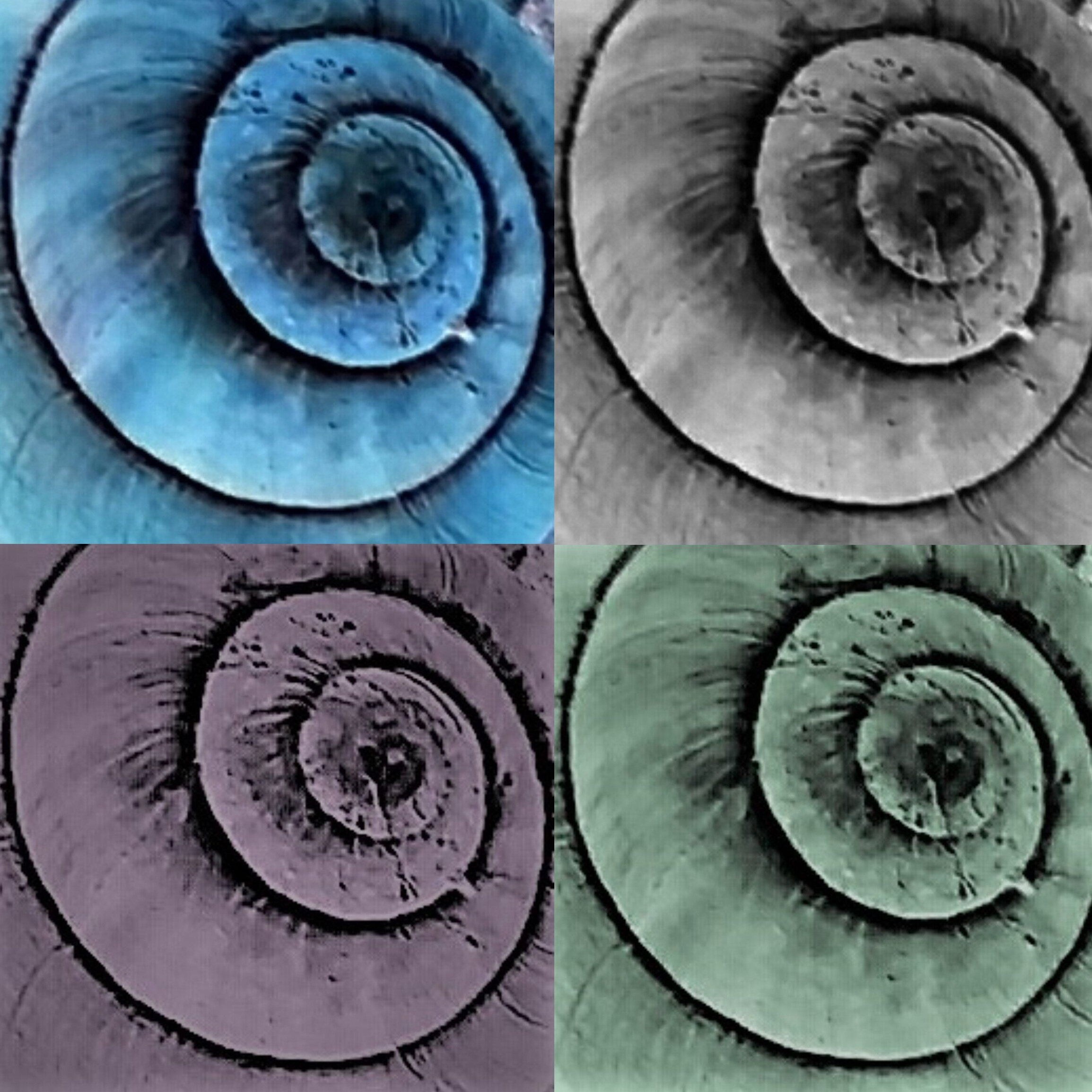 spirals+4.jpg