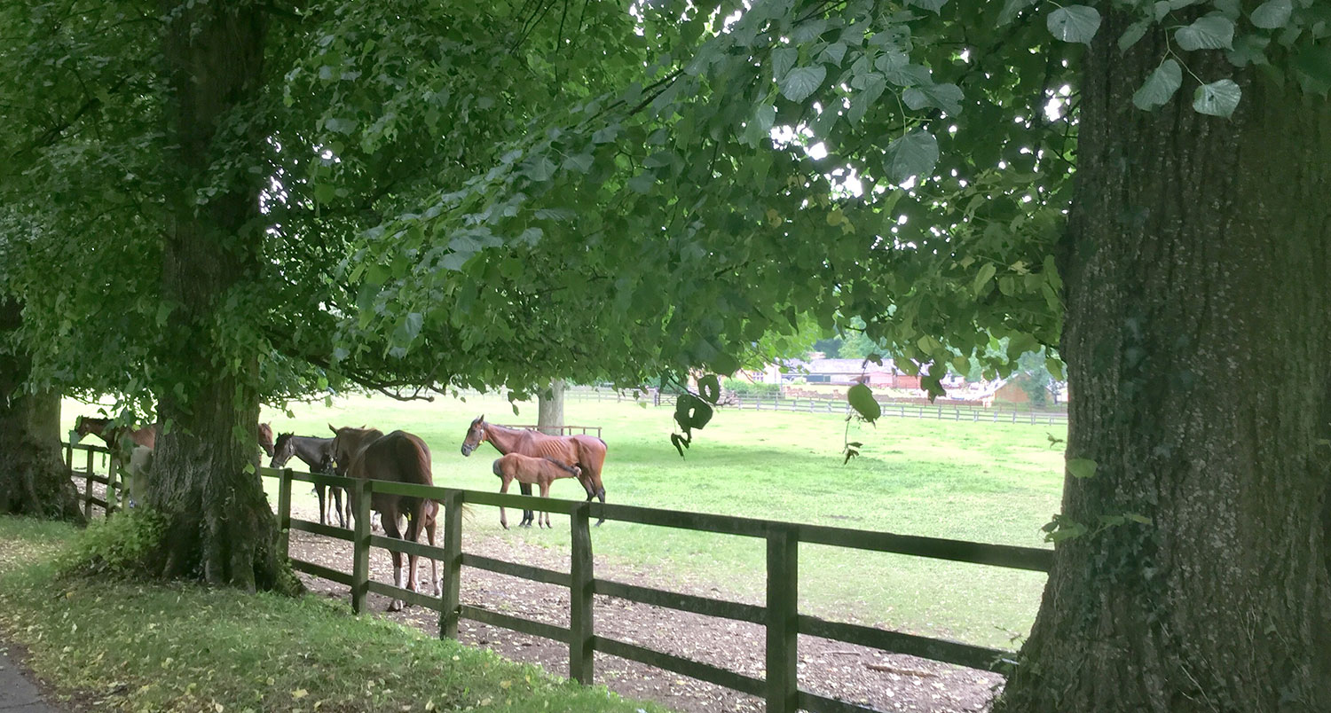FOAL AND MOTHER AT BATSFORD STUD