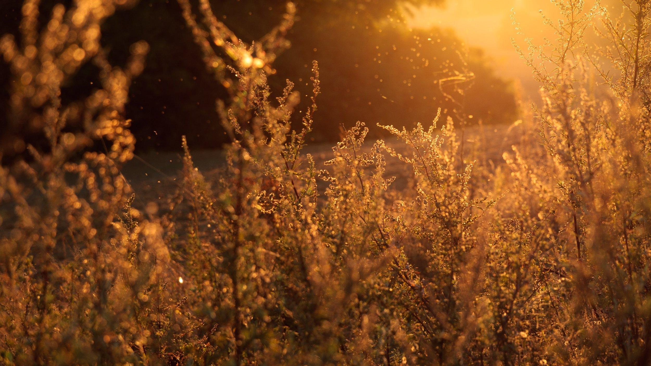 field-of-grass.jpg