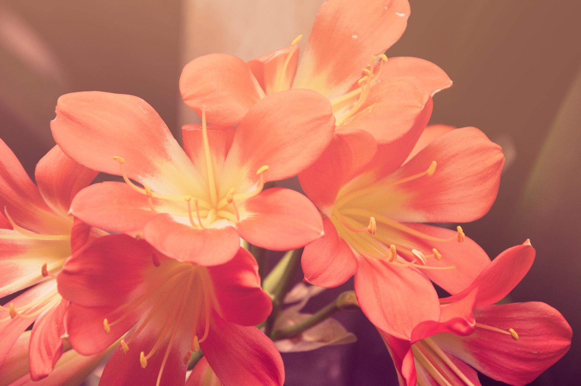 orange-flowers.jpg