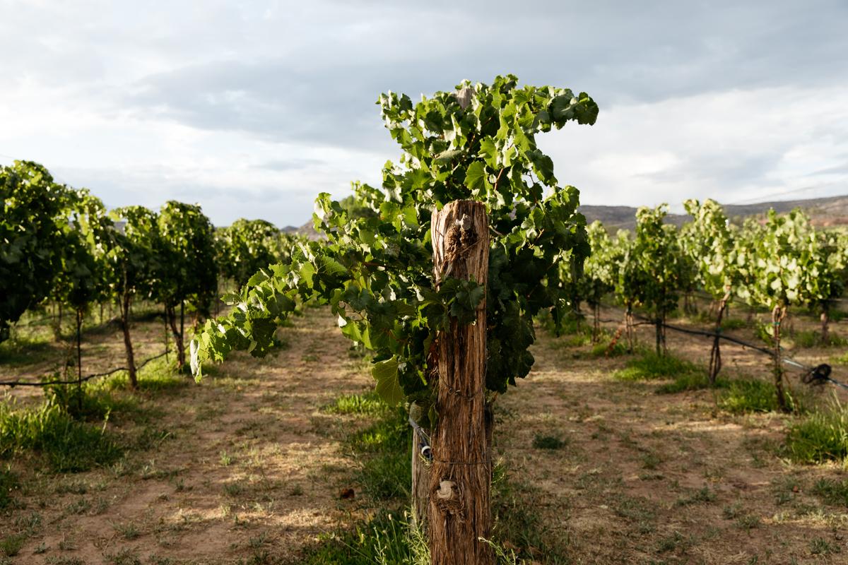 gylfphephoto_sutcliffe_vineyards_24.jpg