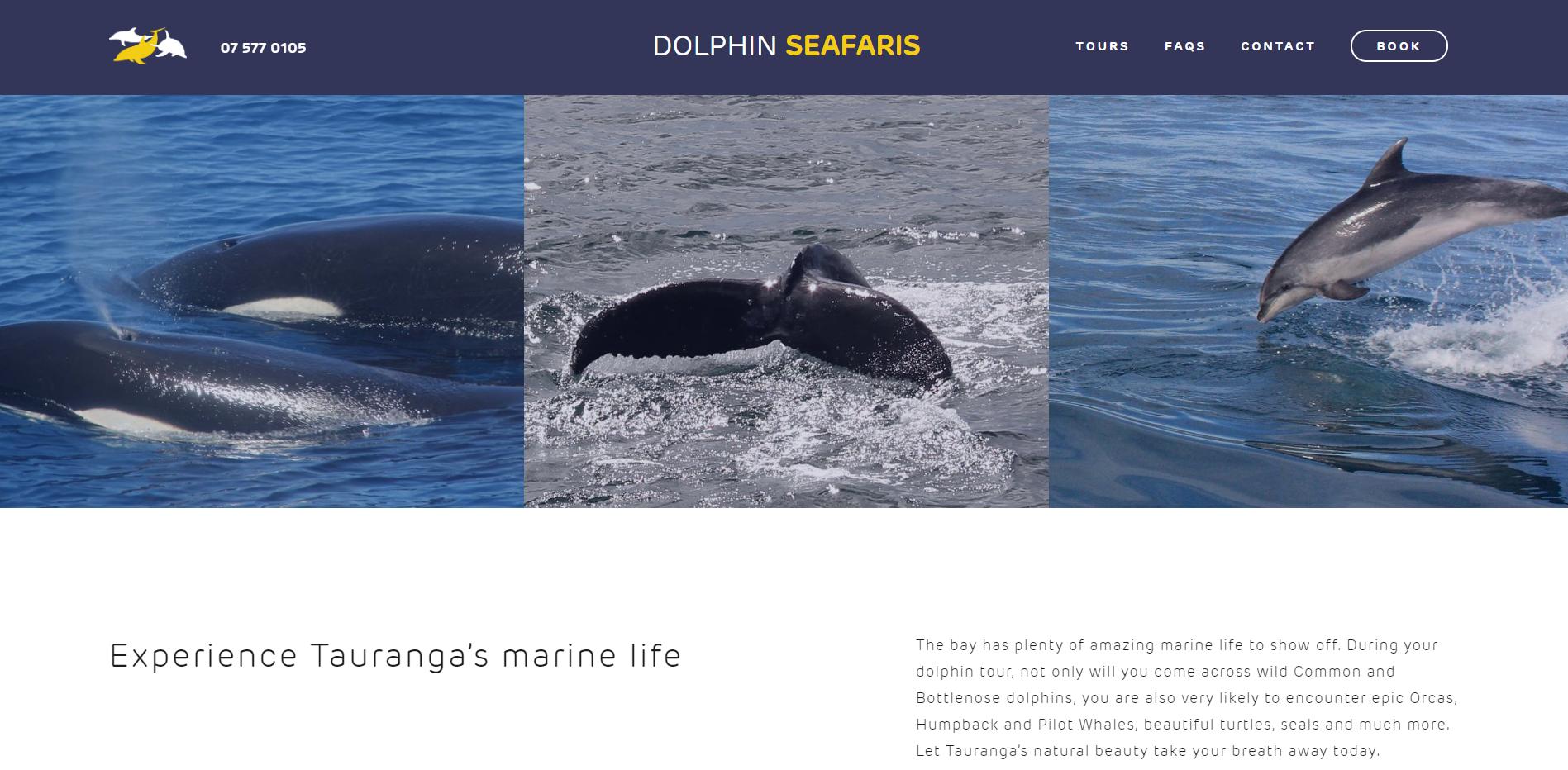 dolphin seafaris website developement.PNG