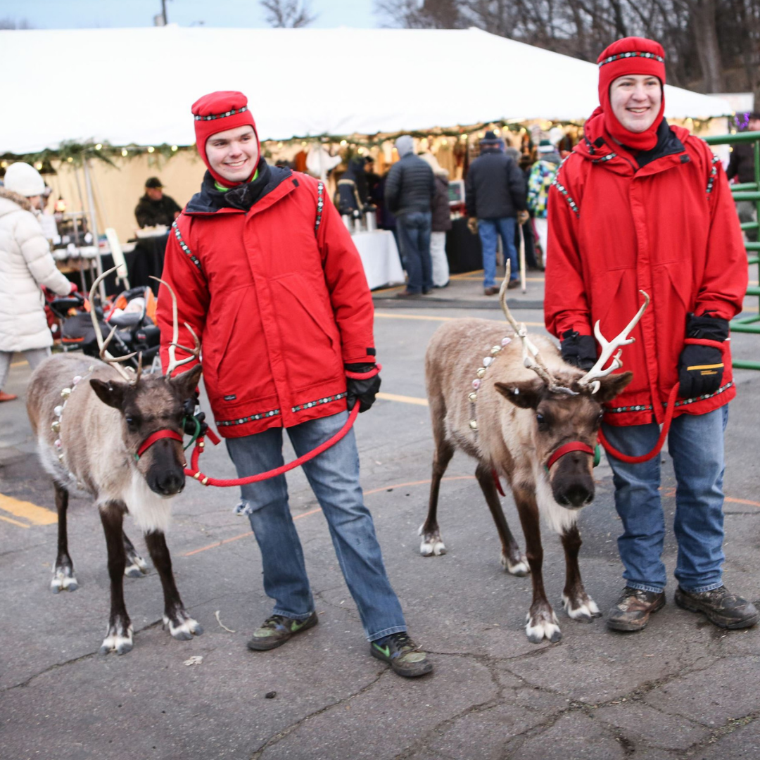 Reindeer at Christkindlsmarkt in Excelsior.jpg
