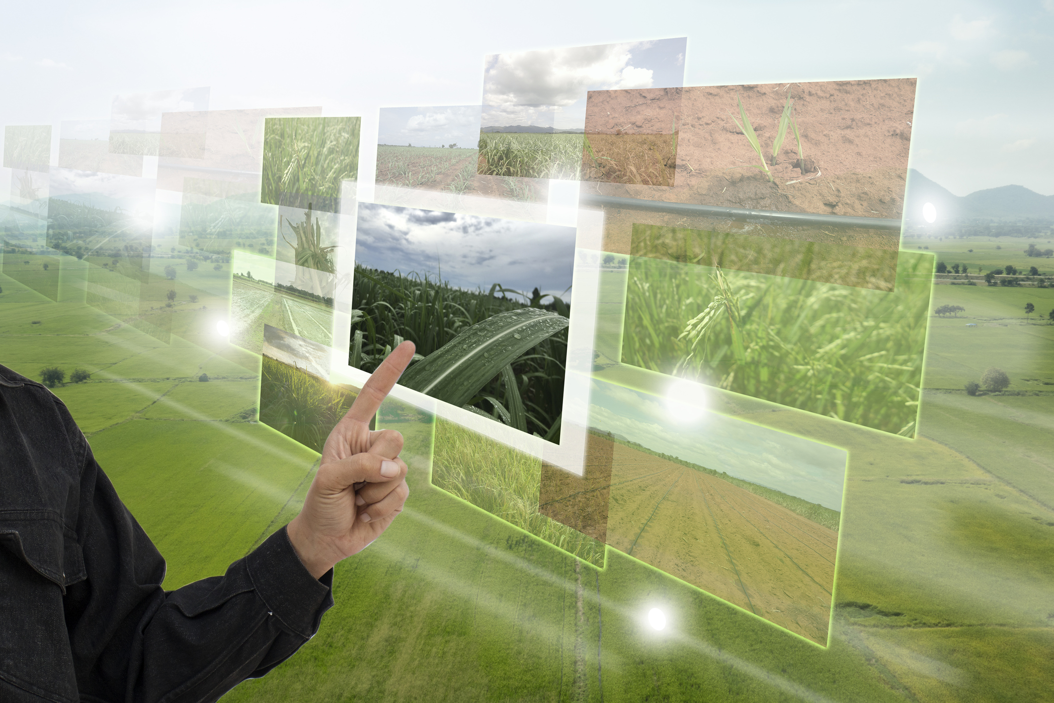 holistic view of your field and crop