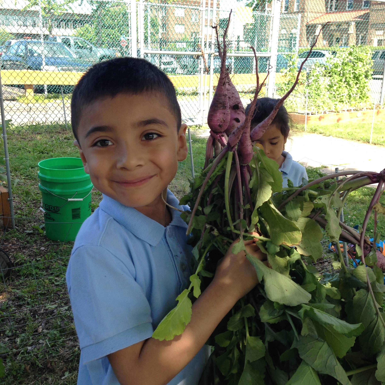 Photo caption: Siembra children harvesting vegetables.