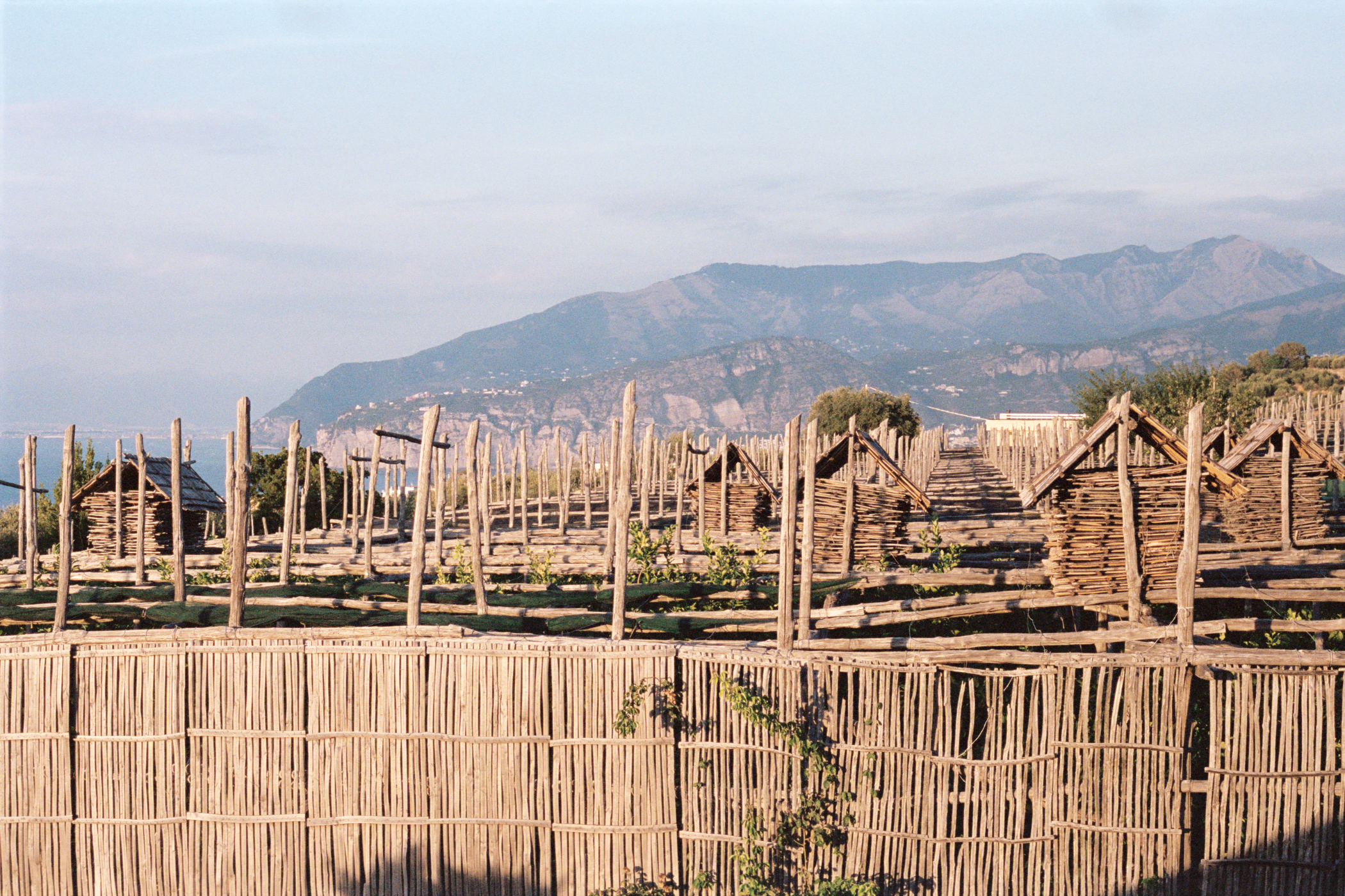 """The Last Pagliarelle Makers - Lemon gardens in Sorrento and Massa Lubrense are protected by pagliarelle which are made of chestnut wood and bamboo. In the winter each pagliarella is laid down like a roof over the garden and in the summer the garden is uncovered, stacking the pagliarelle into """"cassette"""" which look like little houses. Giovanni and his father are the last makers of pagliarelle and today only a few farms still use this traditional method, while most farms now use synthetic nets, a much cheaper alternative."""