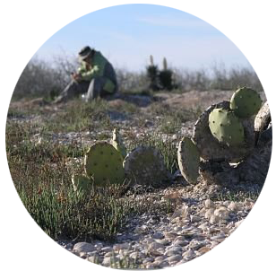 reed.spoil.island.cactus.png