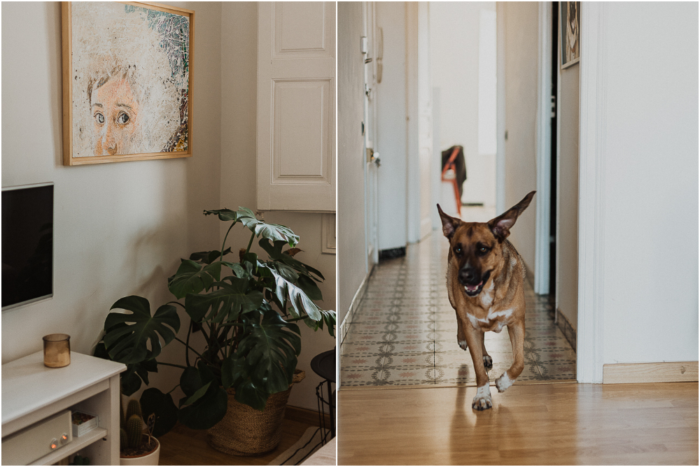 home_session_with_dogs-129.jpg