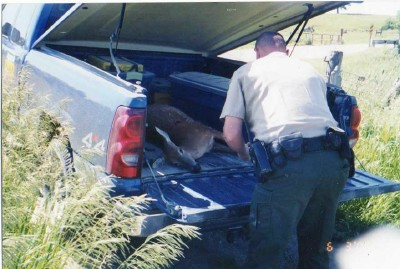 I helped loading this deer for the DNR