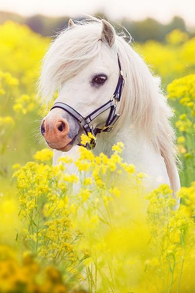 Pony Sitters Club Series