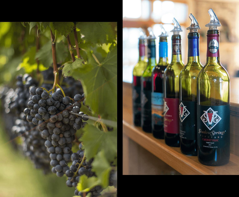 winegrape_8bit.png