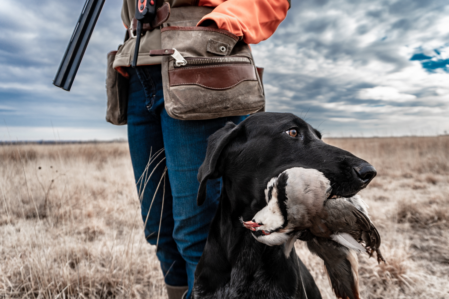 german-shorthaired-pointer-standing-next-to-owner.jpg