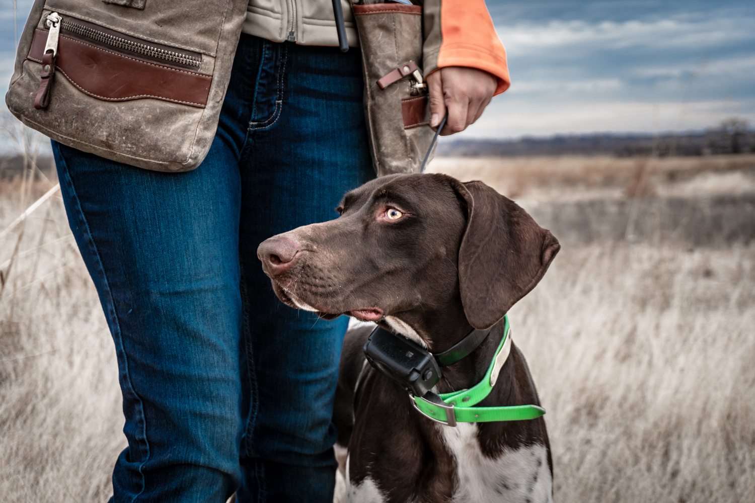 german-shorthaired-pointer-standing-next-to-owner-in-the-field.jpg