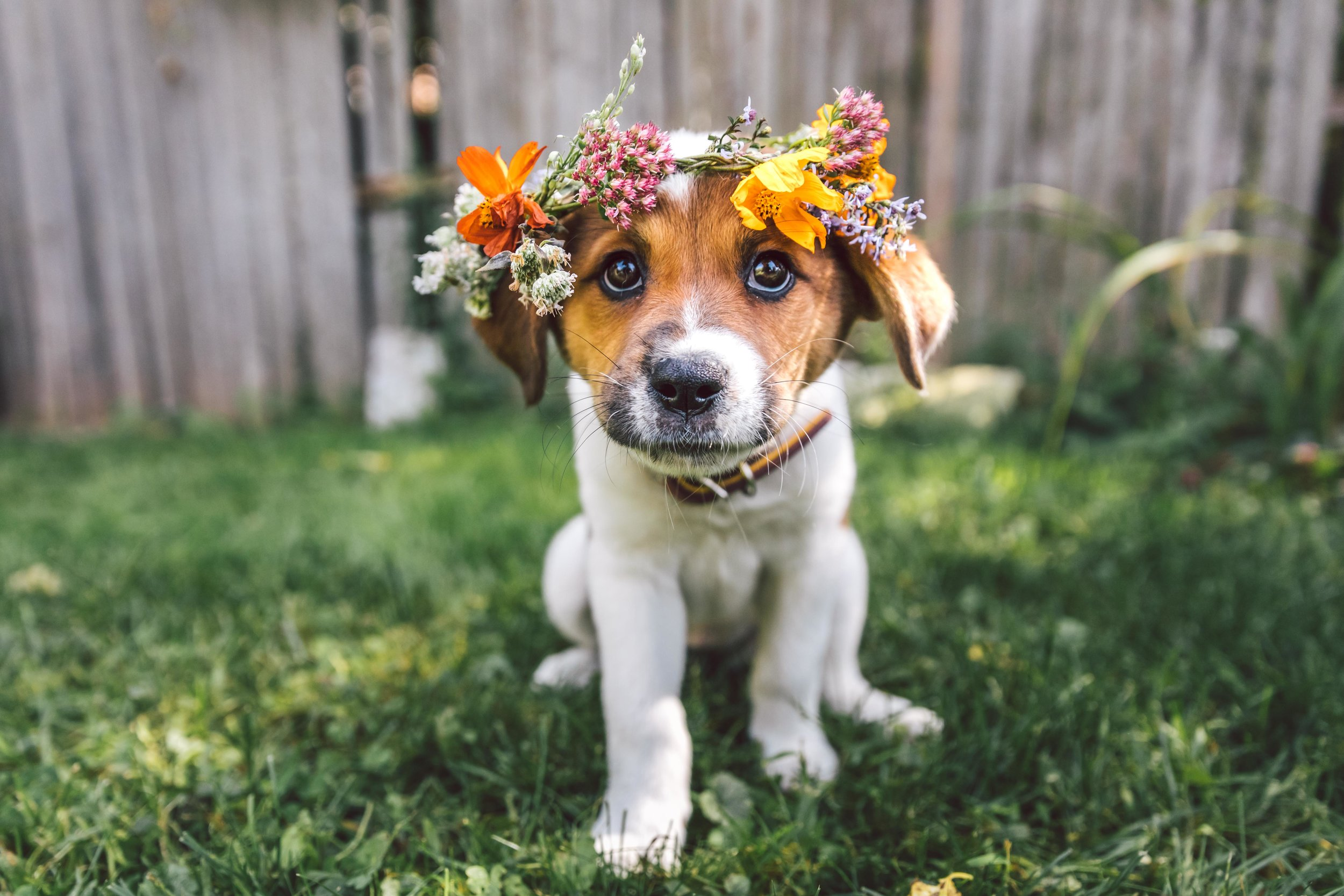 """Poppy had a 14/10 Session! - """"Chris photographed Poppy at Red Bud Isle. We had such a great time and loved how the photos came out. A dog + people session is next!""""See Poppy's Entire Session"""