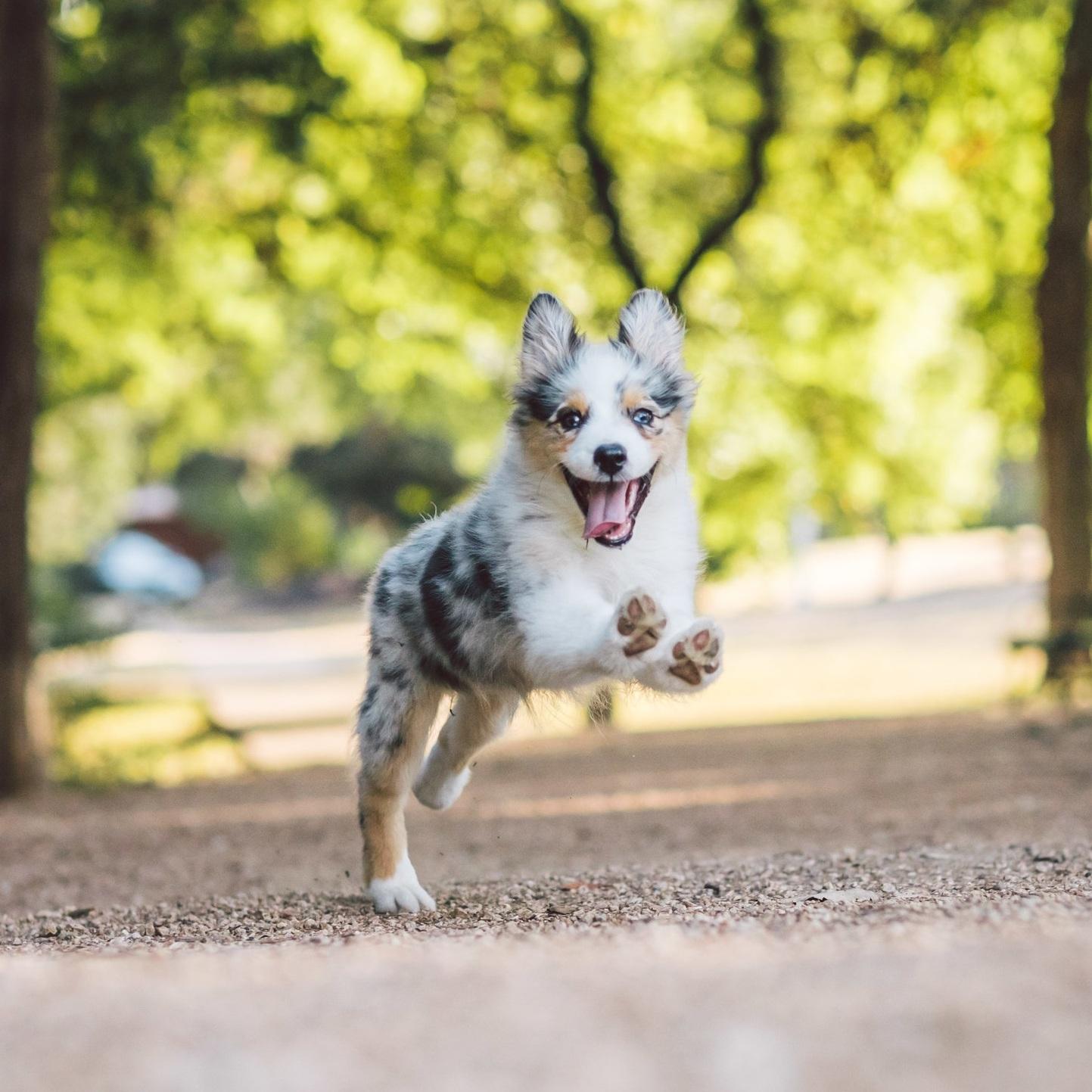 Wyatt Aussie Pup (1 of 4).jpg