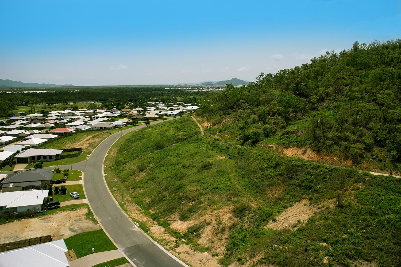 Aerial Tree Tops.jpg