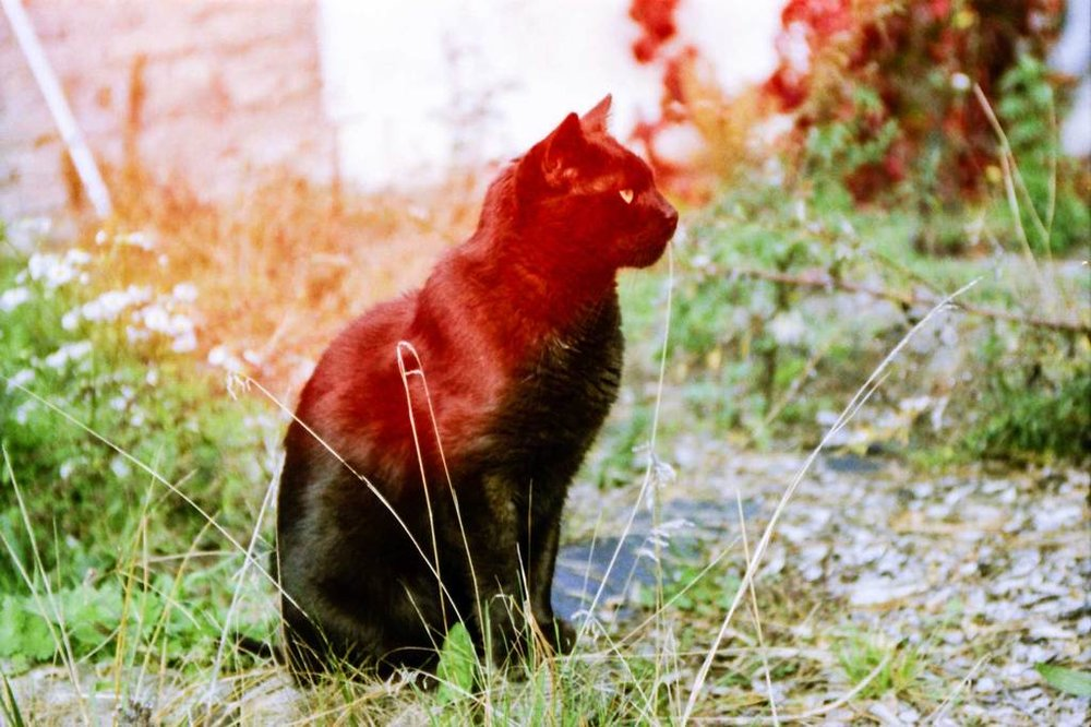 cat_1024x1024.jpg