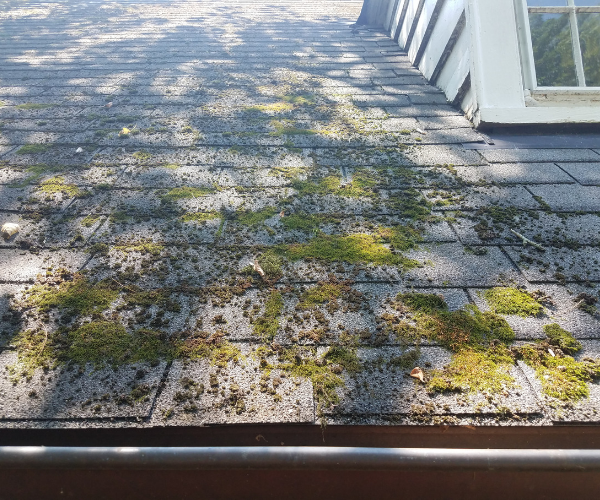 roof-maintenance-remove-moss