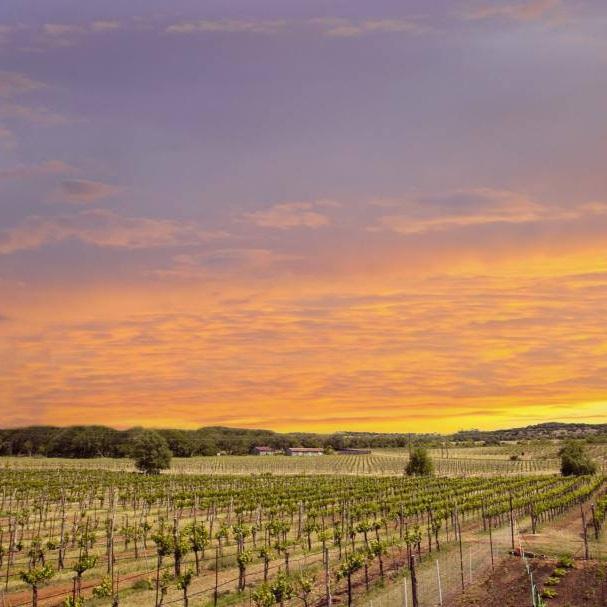 Spicewood Vineyards -