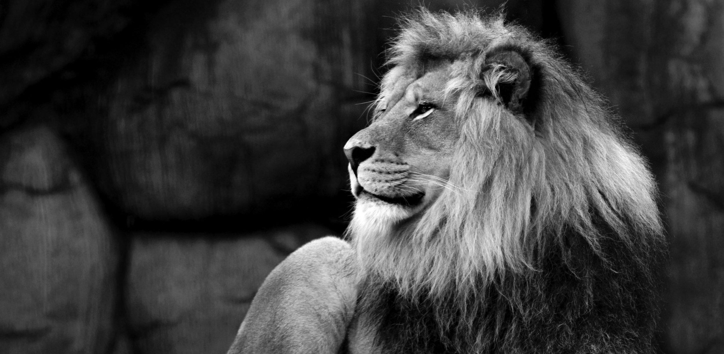 Lion-BW.jpg
