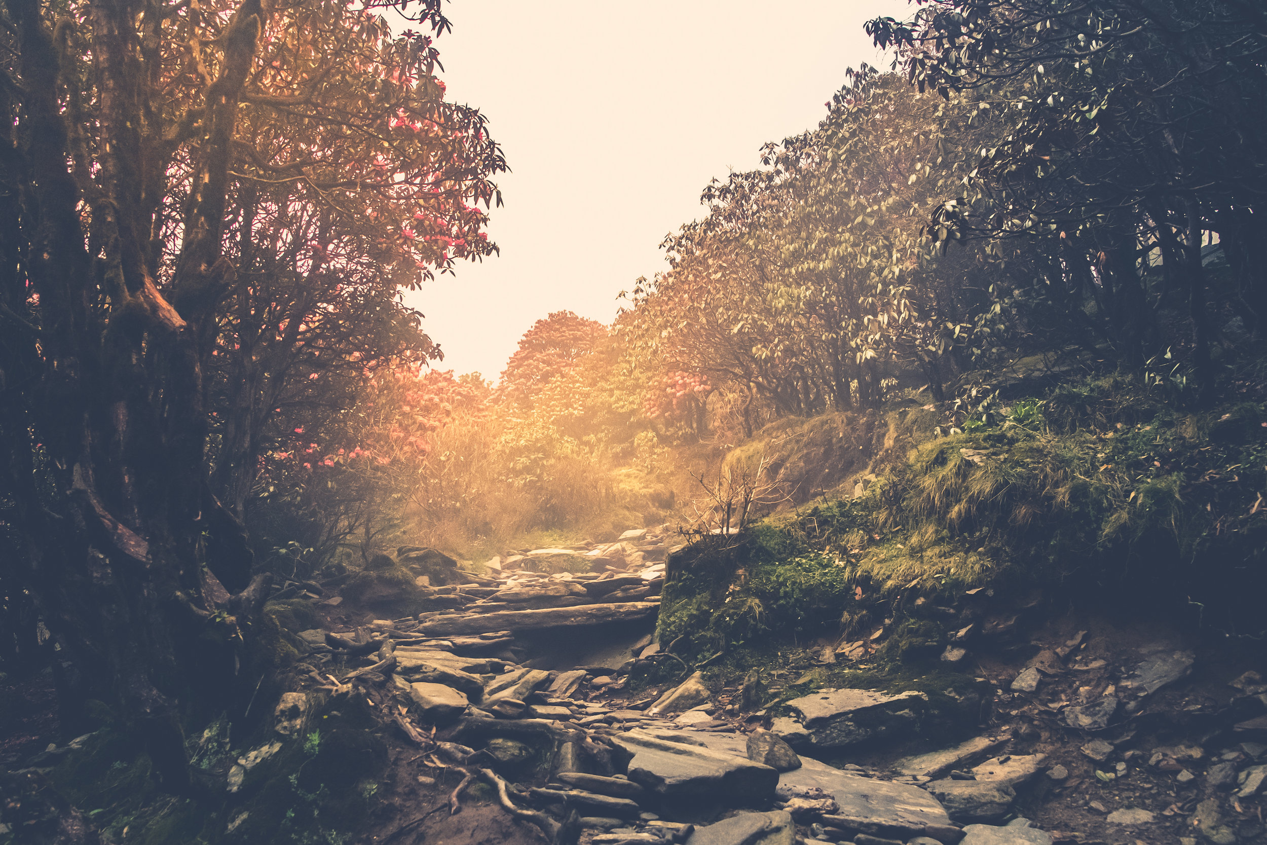 trail-through-a-mysterious-forest-PY4TCB5.jpg