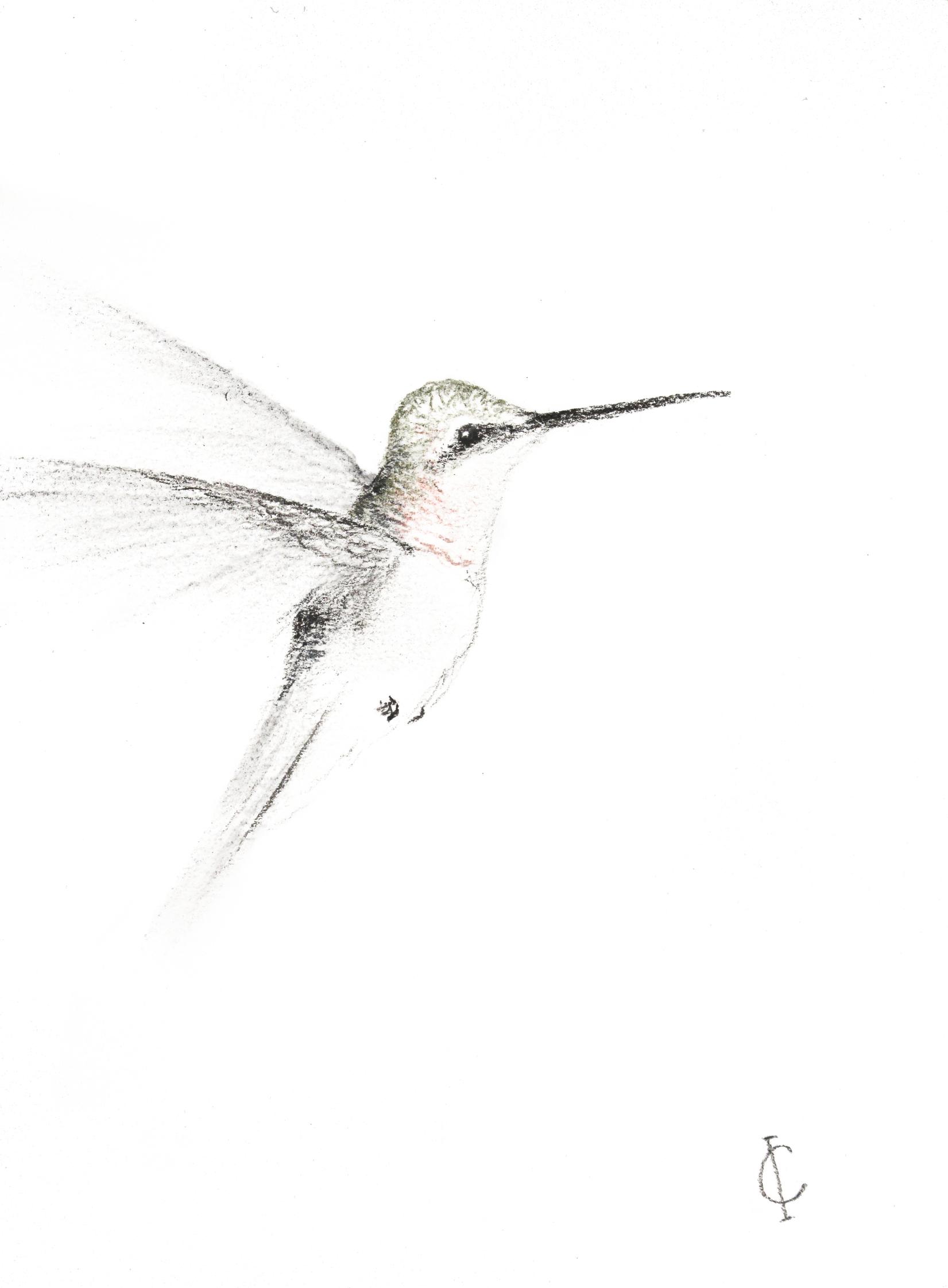 hummingbird11_imaginefreedomart.com_.jpg