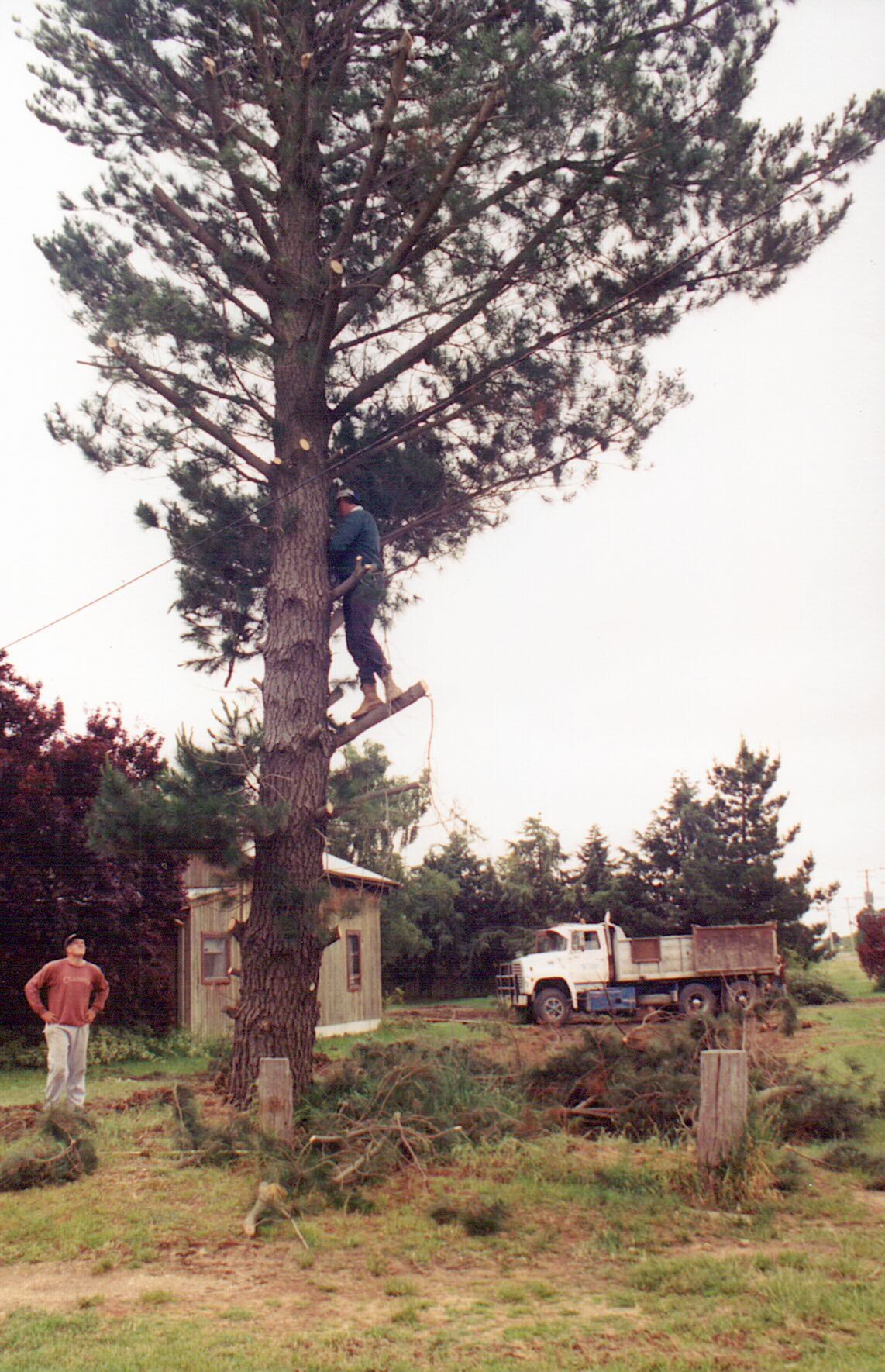 Local, Bill Southwell taking down the pine trees