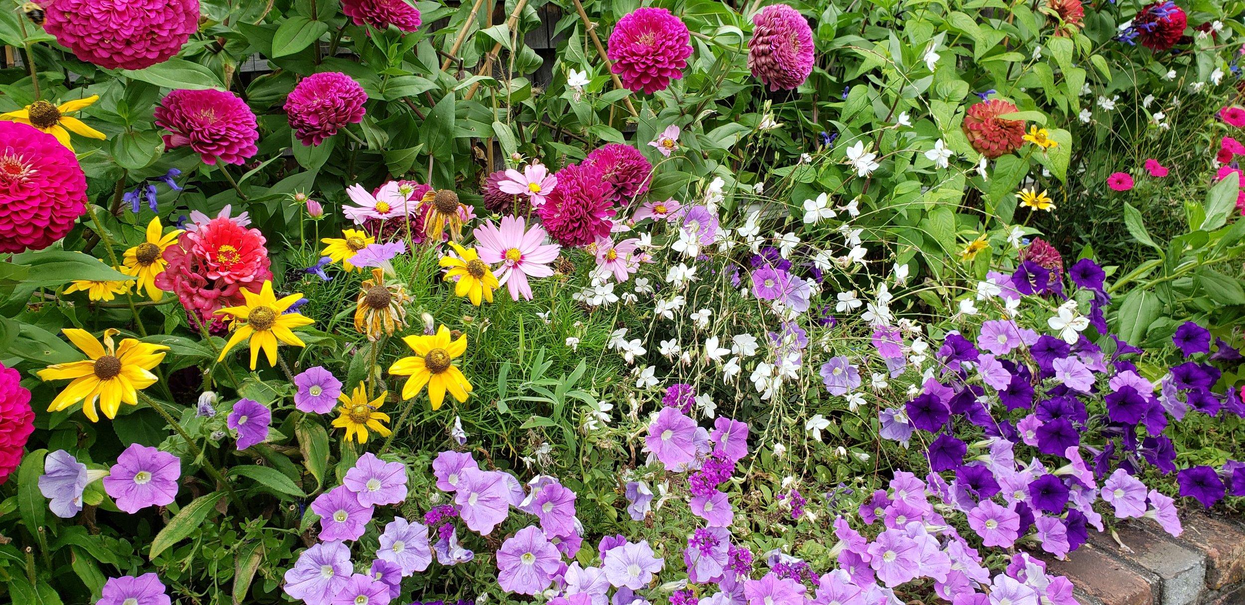 garden-sept2019.jpg