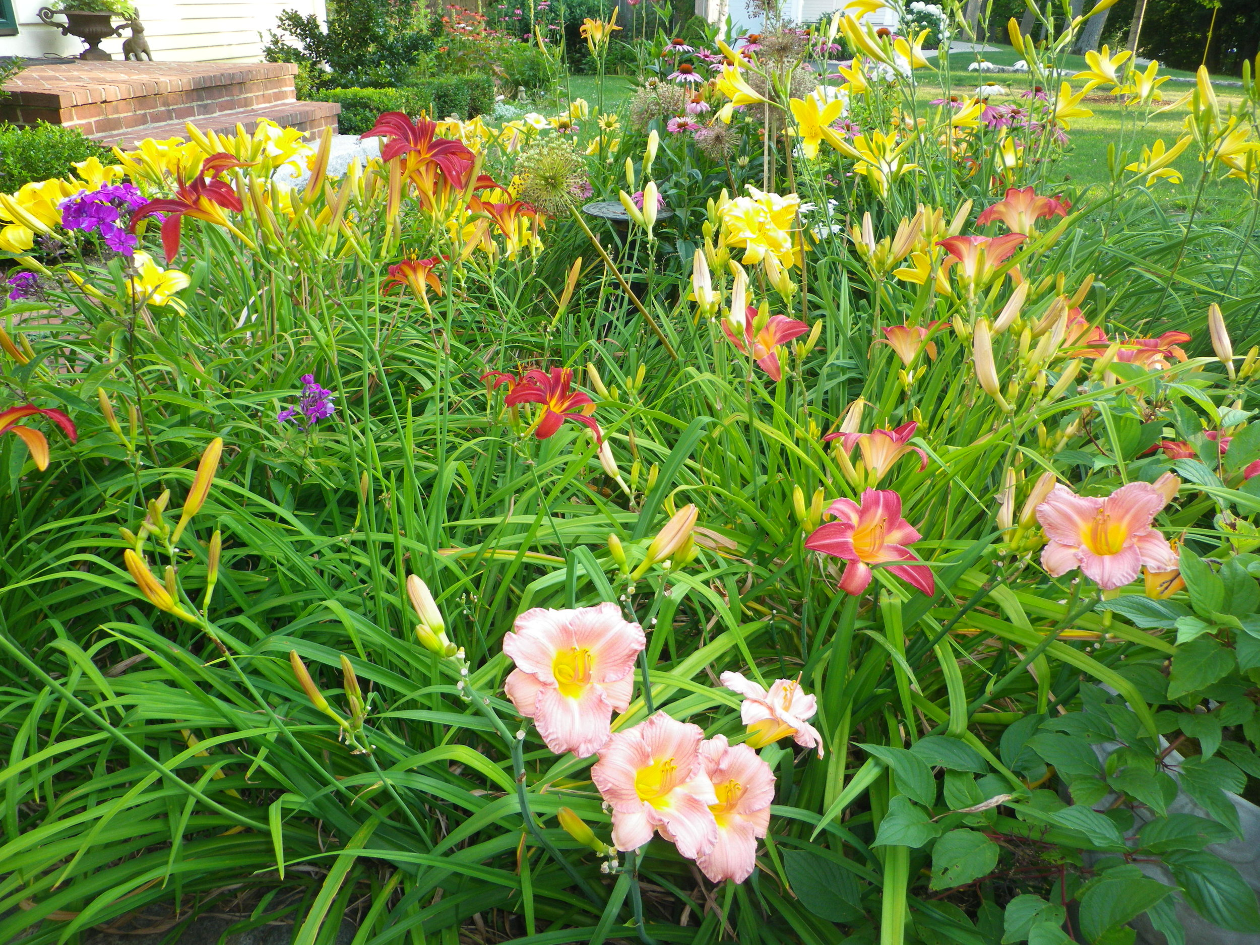 16) Daylilies of the rainbow.jpg