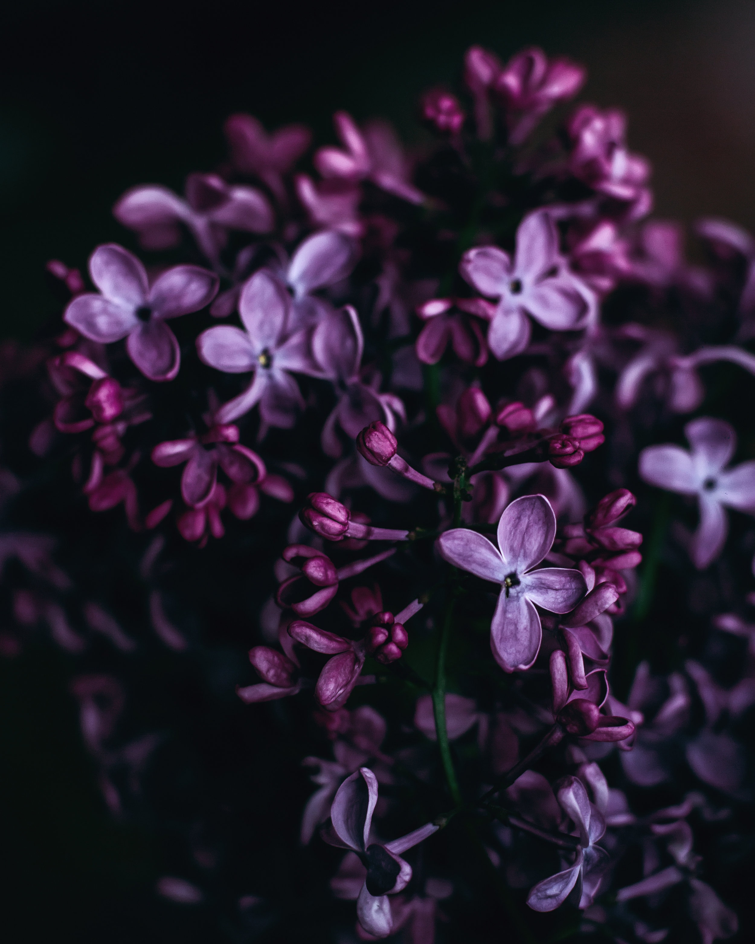 PURPLE - Purple is considered a royal color. It is frequently associated with mysticism and spirituality. It is calming to the nerves, bolsters creativity and is purported to quell hunger.So if you're on a diet…..?