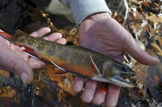 Sustain our work - Trout Unlimited works hard to develop and support the next generation of angler-stewards and to share the joys and healing power of fishing and trout streams with military service veterans, youth, cancer survivors and other demographics who benefit from time spent in the company of a healthy trout stream.