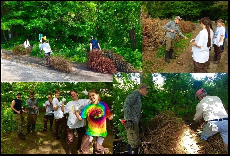 Collage from 2019's Conifer Revetment project on Deep Brook