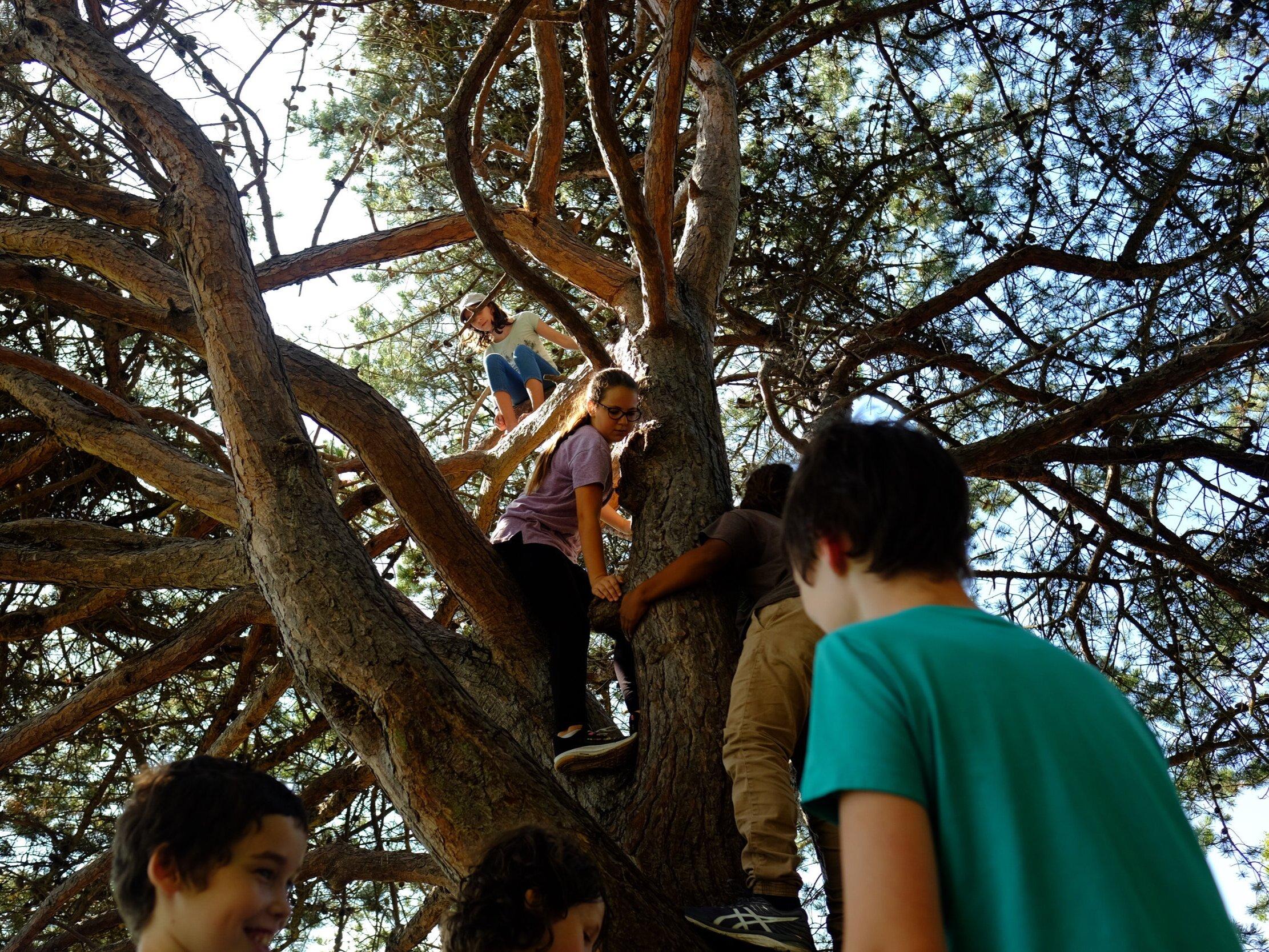 NBTSD+tree+climbing+5.jpg