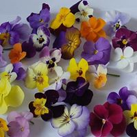 Brotes de Tres Arroyos - Brotes y hojitas, flores comestibles, mielTres Arroyos