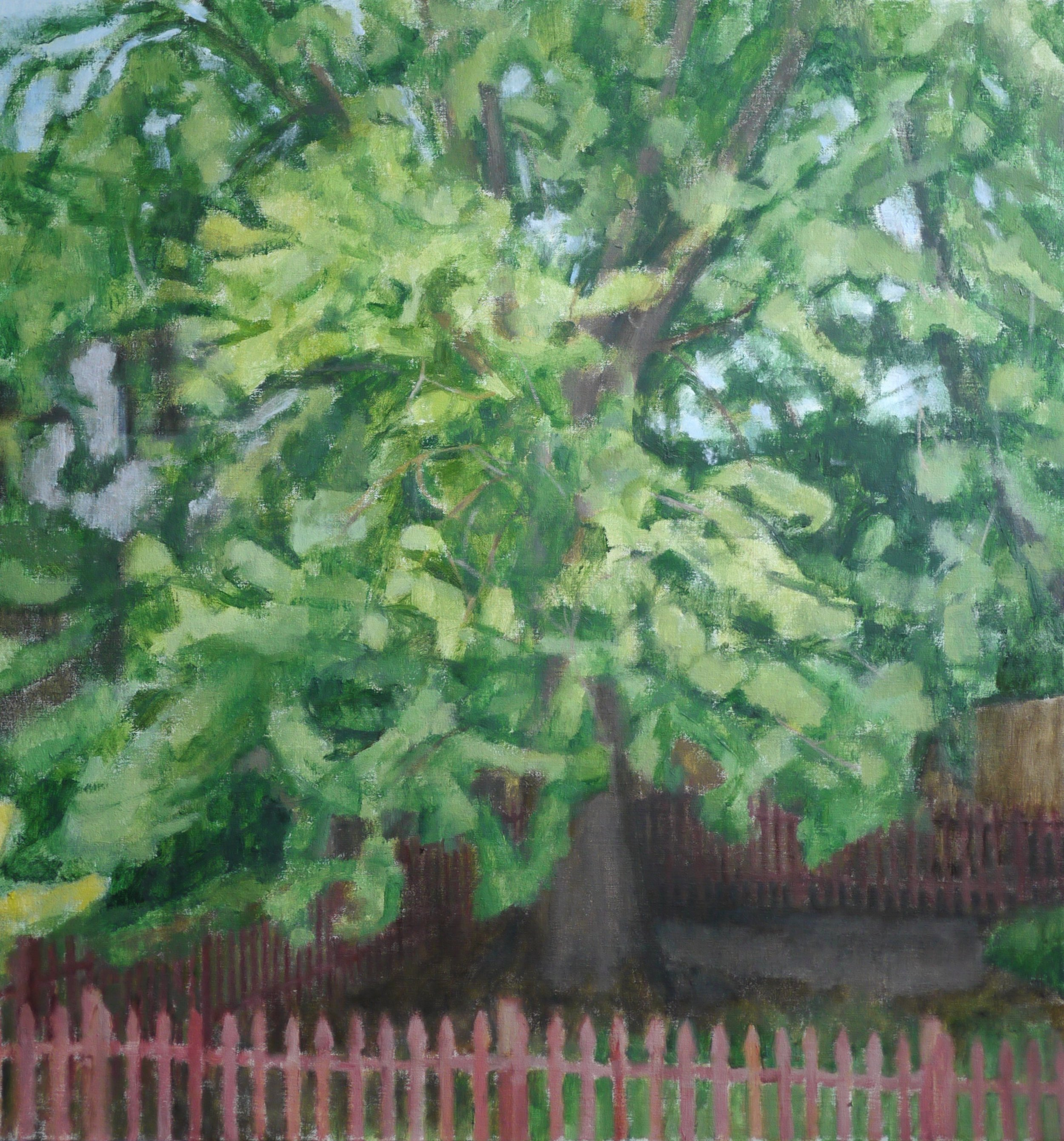 Maple Tree and Fence, 2019