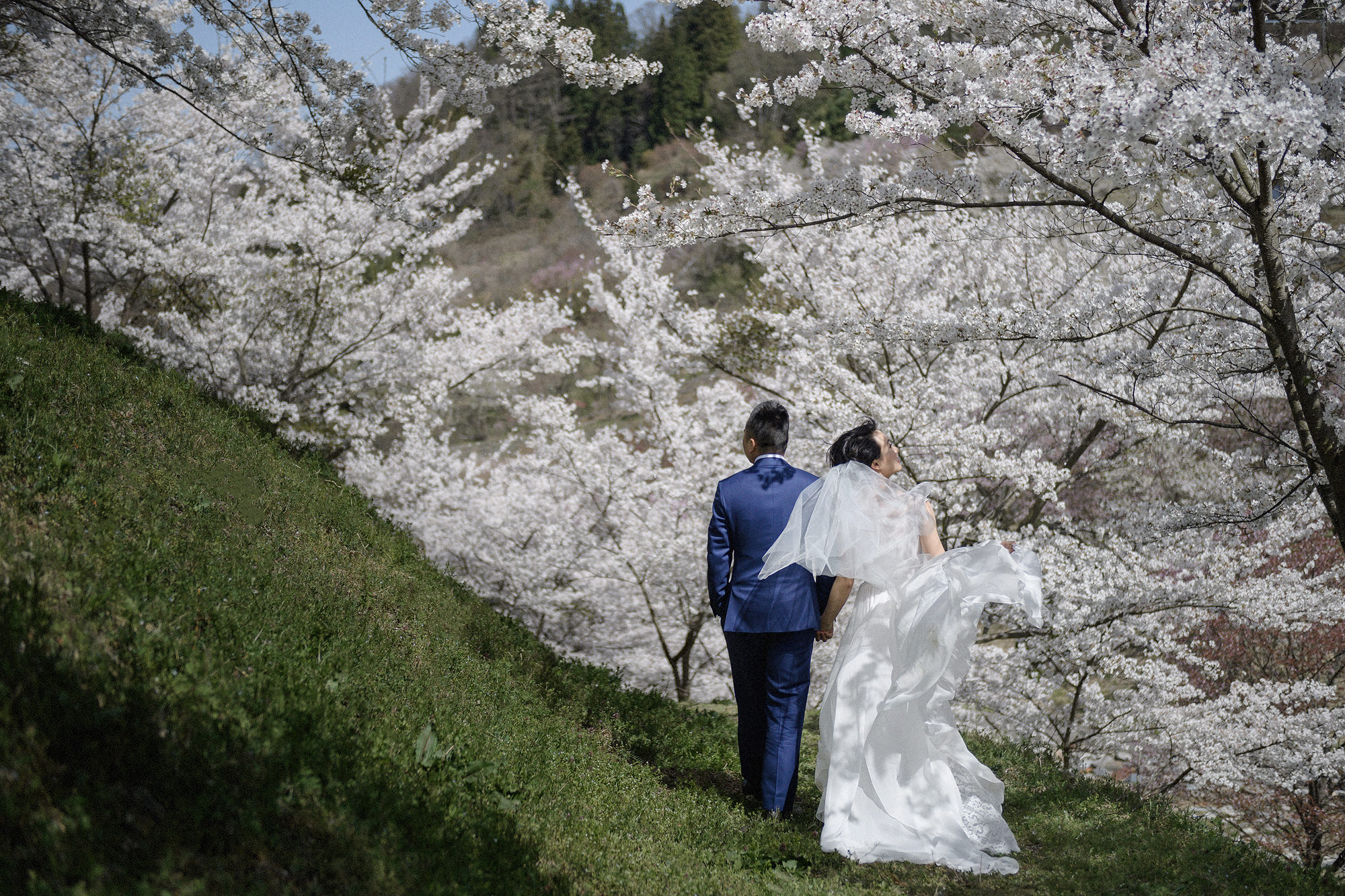 Cherry Blossom Elopement in Japan