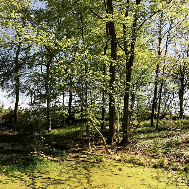 Fantastisk forårsdag... #margaard #margårdgods #forår #danskeherregårde #herregård