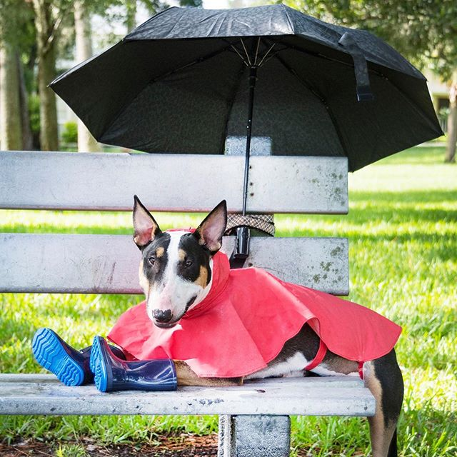 """Hurricane Emergency Check List: -Fitted Collar/Leash -Legible Clear Tags With Current Numbers/Addresses -Secure Crate, Bowls, Toys, Blanket (Something familiar with the smell of home) -Documents In A Sealed Ziploc Bag (Vaccination Record, Prescriptions, Clear Photo) -Water, Food, Medications (2 Week Supply) -Microchipped and/or Information Current  With Dorian right around the corner, we want to make sure everyone has their Pet Emergency Check List ready in hand!  From everyone 2 and 4 Legged alike at Rugaz Rescue Inc. Be Prepared, Be Safe! Not just this week to come, but always!  Photo Credit: Lee Ann Poling Photography Alumni'18 """"Manson"""""""