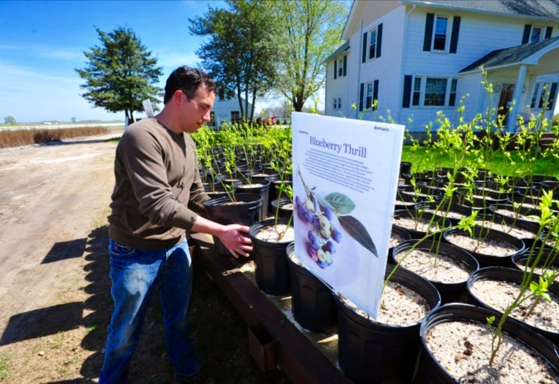 Blueberry Plants for Sale at DiMeo Farms.jpg