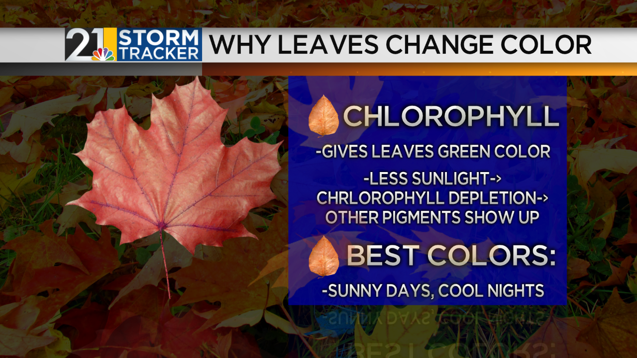 Why Leaves Change Color.png